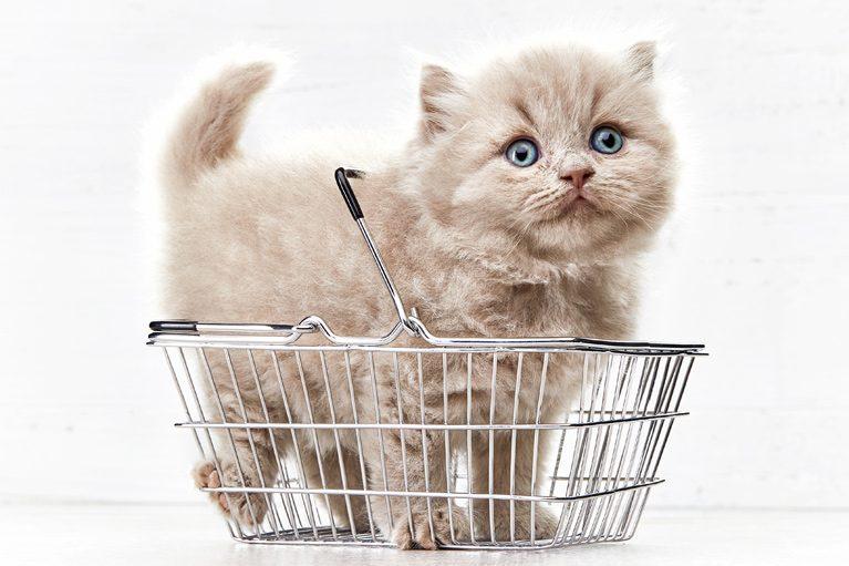 Kaip sukurti internetinę parduotuvę: ką daryti atidarius